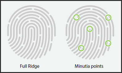 Fingerprint Ridges and Minutia